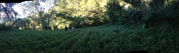 Veiw of fields at ENCA Farm.