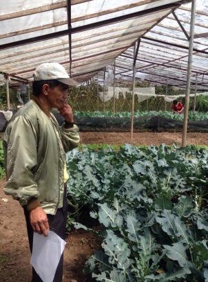 Cesar galveys planting system